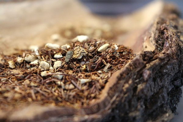 Chai Massai (Naturbelassener Rooibos Tee)
